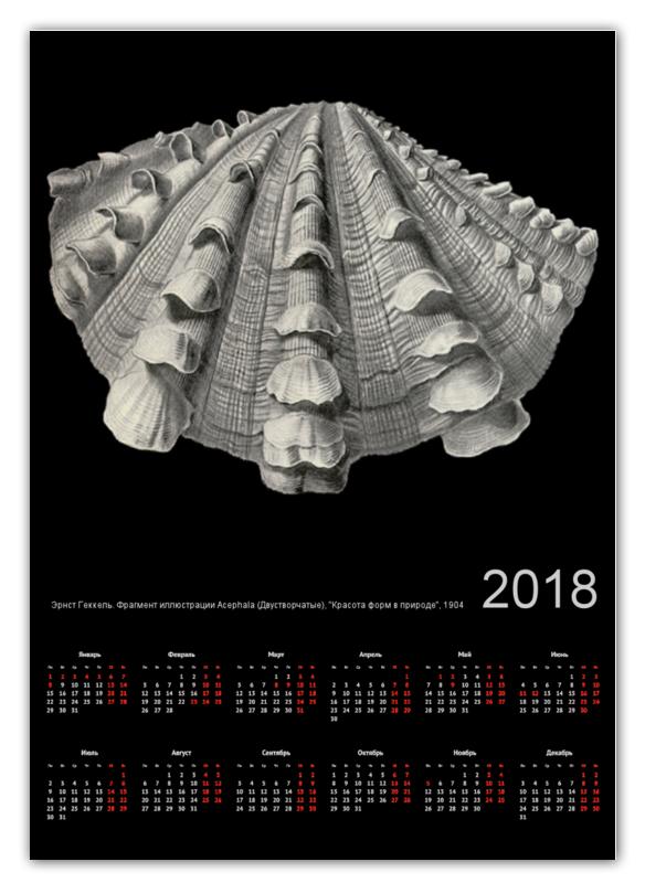 Календарь А2 Printio Acephala, ernst haeckel