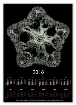 """Календарь А2 """"Astrophyton Darwinium Эрнста Геккеля"""" - картина, черно-белый, биология, красота форм в природе, эрнст геккель"""