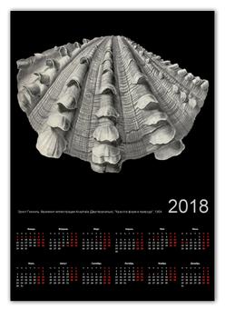 """Календарь А2 """"Acephala, Ernst Haeckel"""" - черно-белый, ракушка, биология, красота форм в природе, эрнст геккель"""