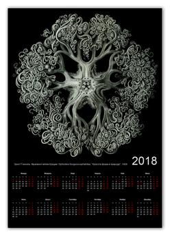 """Календарь А2 """"Ophiodea Эрнста Геккеля"""" - картина, черно-белый, биология, красота форм в природе, эрнст геккель"""