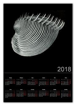 """Календарь А2 """"Acephala Эрнста Геккеля"""" - черно-белый, ракушка, биология, красота форм в природе, эрнст геккель"""