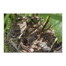 """Холст 20х30 """"Семья."""" - семья, птицы, гнездо, яйца, птенцы"""