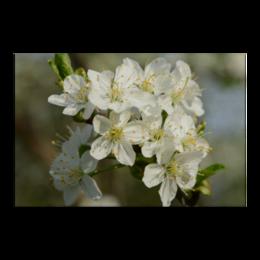 """Холст 20х30 """"Весна"""" - цветы, фото, весна, природа"""