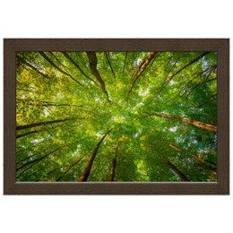 """Холст 20х30 """"Прекрасная высота"""" - лес, деревья, природа, природный пейзаж"""
