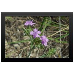 "Холст 20х30 ""Натюрморт"" - цветок, трава, лепесток, тычинка, пестик"