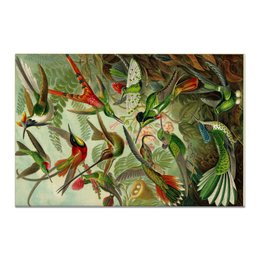 "Холст 20х30 ""Колибри (Trochilidae, Ernst Haeckel)"" - картина, колибри, день матери, красота форм в природе, эрнст геккель"