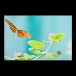 "Холст 20х30 ""Свобода"" - бабочка, лето, цветок, весна, свобода"