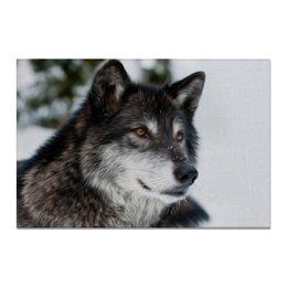 """Холст 20х30 """"Серый волк"""" - хищник, животные, собака, волк, морда"""