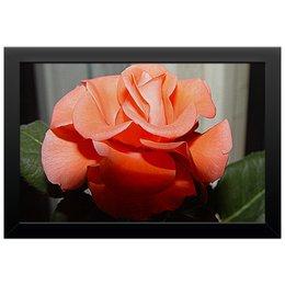 """Холст 20х30 """"Алая роза."""" - цветок, роза, розы, шик, алая роза"""