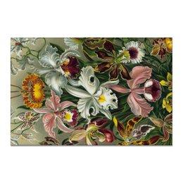 """Холст 20х30 """"Орхидеи (Orchideae, Ernst Haeckel)"""" - цветы, картина, орхидея, красота форм в природе, эрнст геккель"""