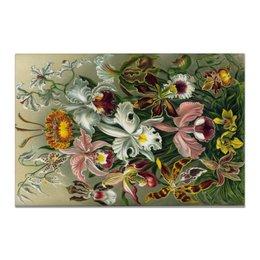 """Холст 20х30 """"Орхидеи (Orchideae, Ernst Haeckel)"""" - картина, орхидея, день матери, красота форм в природе, эрнст геккель"""