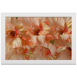 """Холст 20х30 """"Нежность."""" - цветы, нежность, гладиолус, гладиолусы, цветник"""