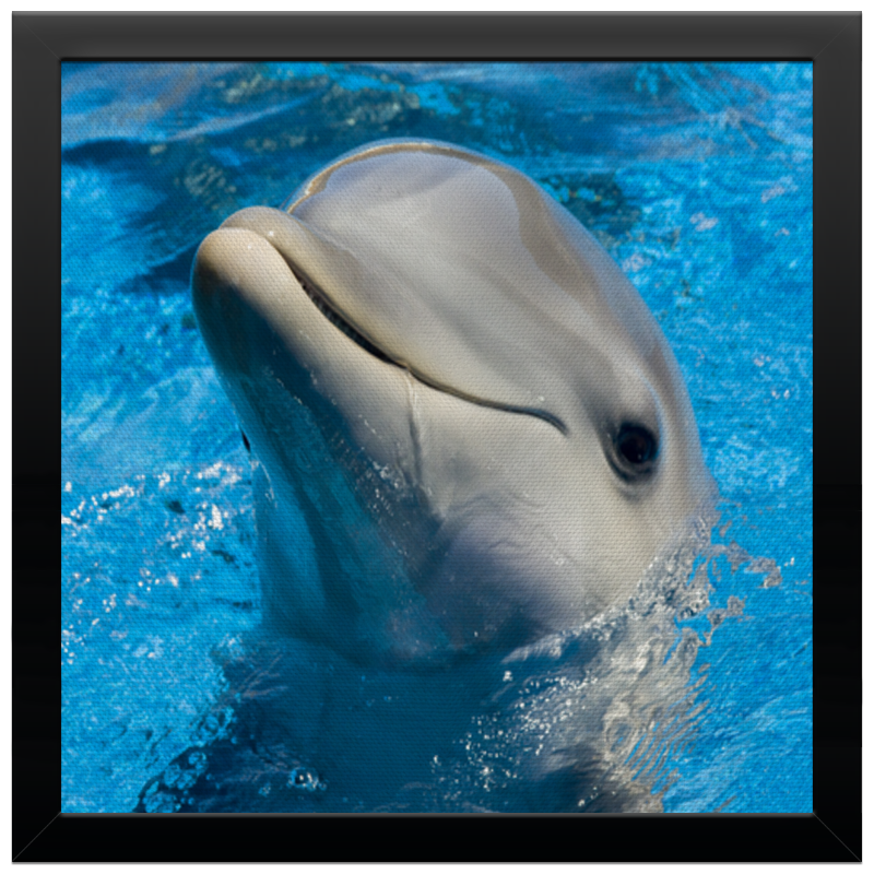 Холст 30x30 Printio Дельфин 1 холст 30x30 printio nj2]0 11