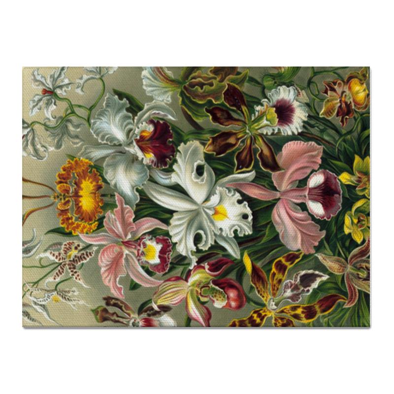 Холст 30x40 Printio Орхидеи (orchideae, ernst haeckel)