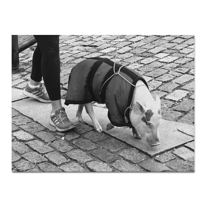 Printio Год свиньи - 2019 константин костенко свиньи