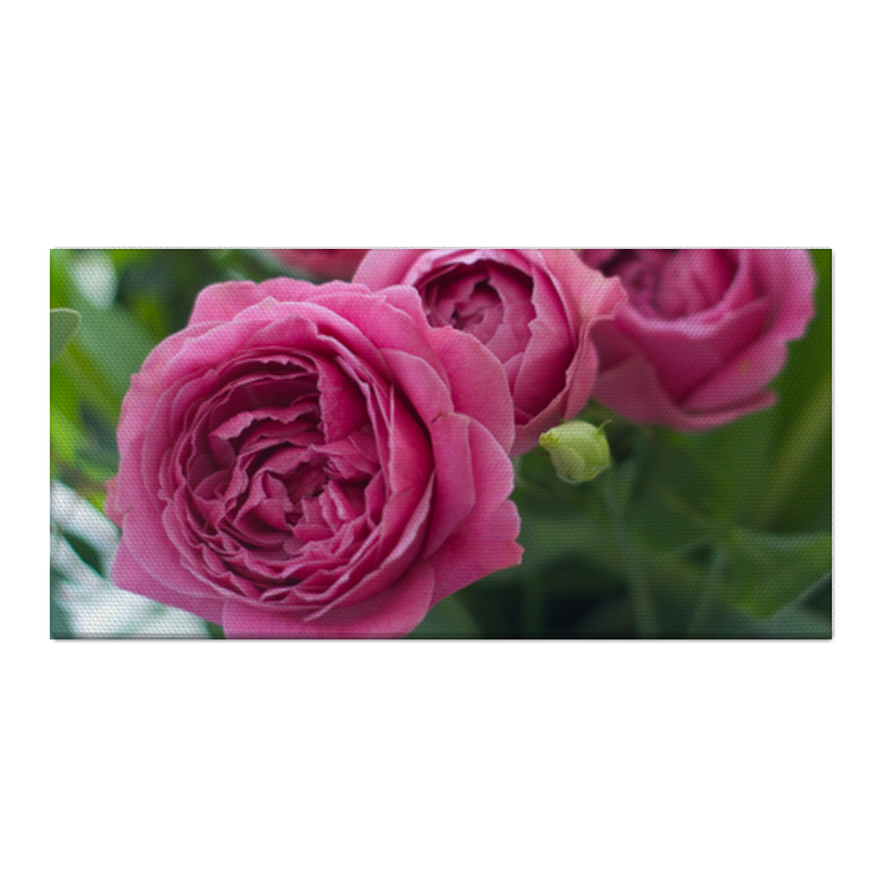 цена Холст 30x60 Printio Розовые розы