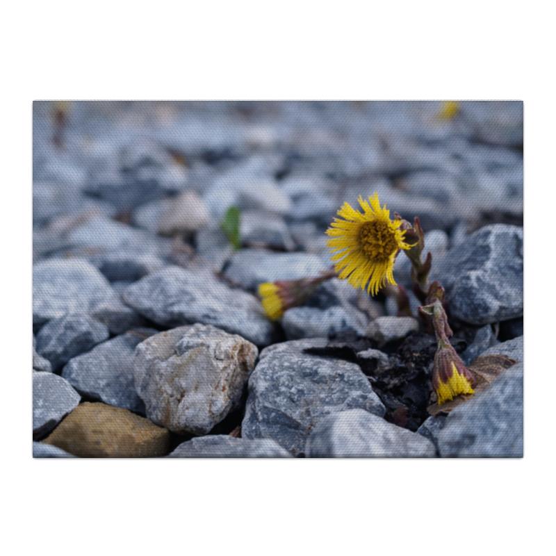 Холст 40x55 Printio Цветок на камнях кок в основы шитья практическое пособие