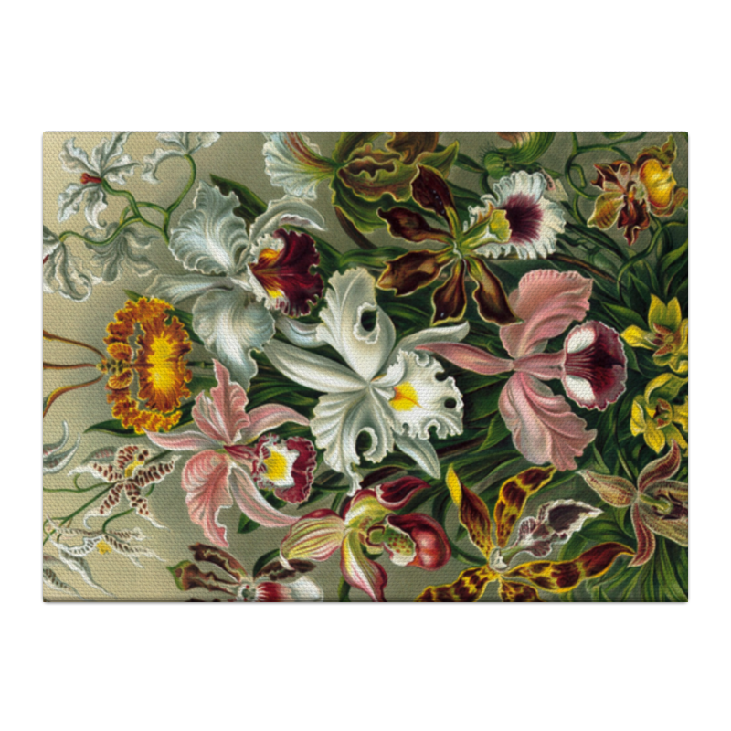 Холст 40x55 Printio Орхидеи (orchideae, ernst haeckel) подарочная коробка большая пенал printio орхидеи orchideae ernst haeckel