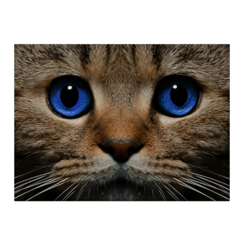 Фото - Холст 40x55 Printio Фото кота тройной портрет по фото игра с собачкой