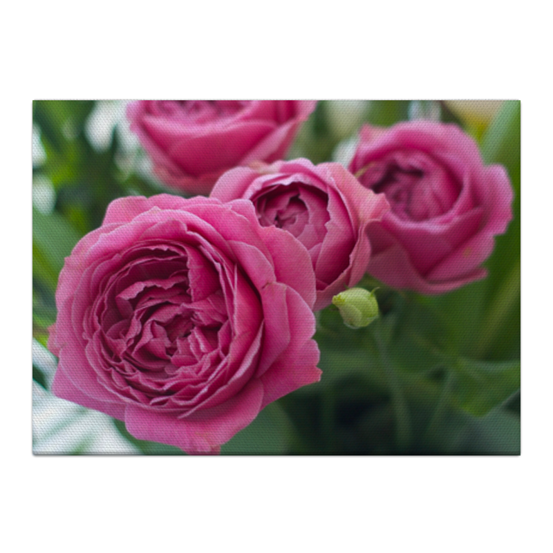Холст 40x55 Printio Розовые розы