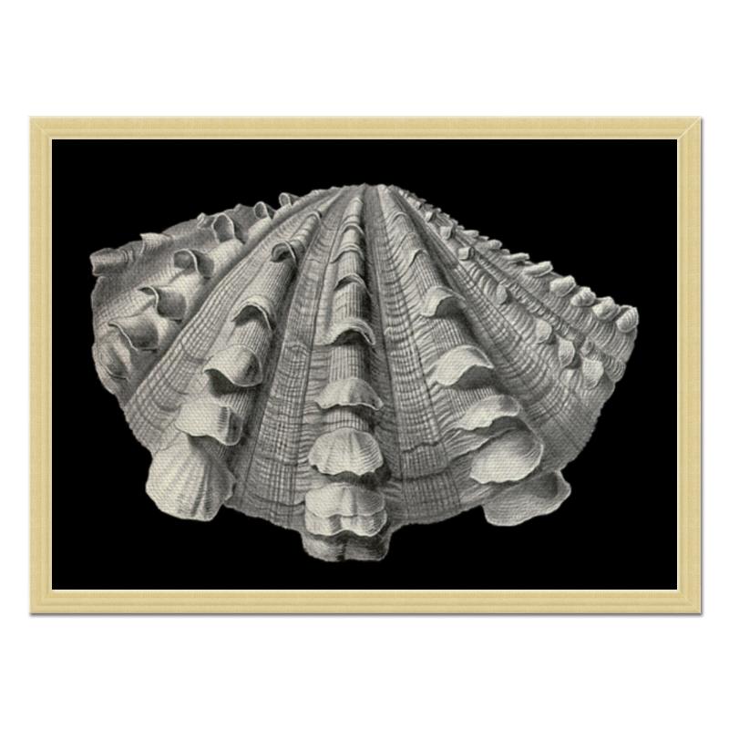 Холст 40x55 Printio Acephala, ernst haeckel холст 40x55 printio на природе