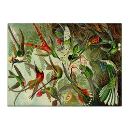 "Холст 40x55 ""Колибри (Trochilidae, Ernst Haeckel)"" - картина, колибри, день матери, красота форм в природе, эрнст геккель"