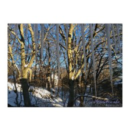 "Холст 40x55 ""Сосульки"" - солнце, весна, деревья, сосульки"