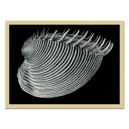 """Холст 40x55 """"Двустворчатые, Ernst Haeckel"""" - картина, черно-белый, ракушка, красота форм в природе, эрнст геккель"""