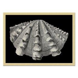 """Холст 40x55 """"Acephala, Ernst Haeckel"""" - картина, ракушка, биология, красота форм в природе, эрнст геккель"""
