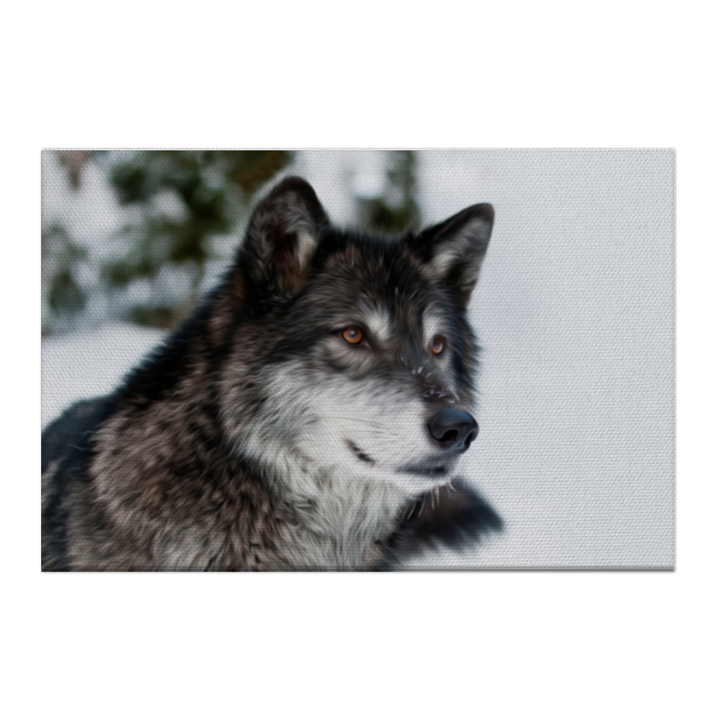 Холст 50x75 Printio Серый волк ясон бадридзе волк проблемы связанные с реинтродукцией крупных хищных млекопитающих