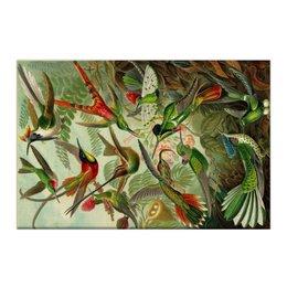 "Холст 50x75 ""Колибри (Trochilidae, Ernst Haeckel)"" - 8 марта, колибри, день матери, красота форм в природе, эрнст геккель"