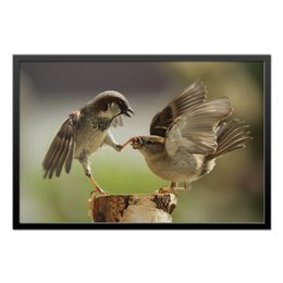 "Холст 50x75 ""Забавные птички"" - прикол, юмор, птицы, птички, клюв"