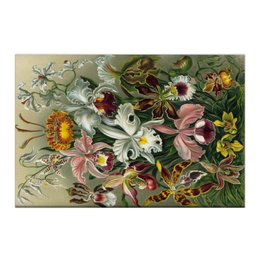 """Холст 50x75 """"Орхидеи (Orchideae, Ernst Haeckel)"""" - картина, орхидея, день матери, красота форм в природе, эрнст геккель"""