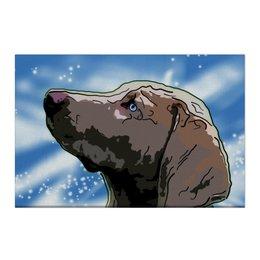 "Холст 50x75 ""Веймаранер"" - животные, собаки, веймаранер"