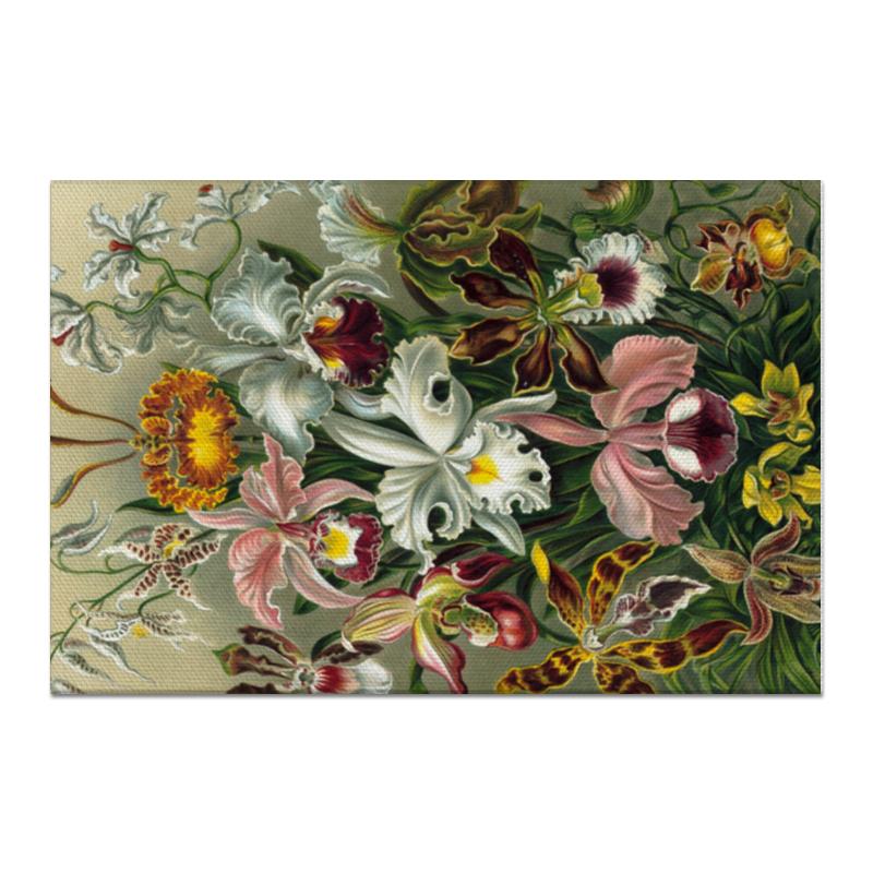 Холст 60x90 Printio Орхидеи (orchideae, ernst haeckel) самые дешевые орхидеи в москве