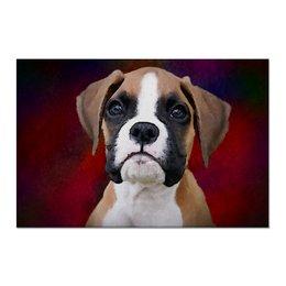 """Холст 60x90 """"Юный боксер"""" - щенок, собака, боксер, boxer, живая природа"""