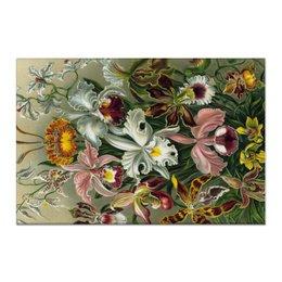 """Холст 60x90 """"Орхидеи (Orchideae, Ernst Haeckel)"""" - цветы, картина, орхидея, красота форм в природе, эрнст геккель"""