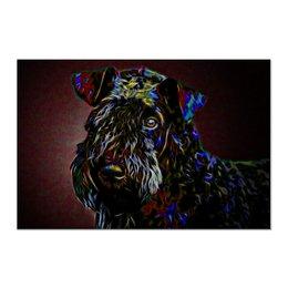 "Холст 60x90 ""Керри-блю-терьер"" - природа, собаки, терьер, керри-блю-терьер, kerry blue terrier"