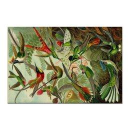 "Холст 60x90 ""Колибри (Trochilidae, Ernst Haeckel)"" - 8 марта, колибри, день матери, красота форм в природе, эрнст геккель"