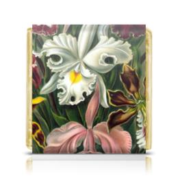 """Шоколадка 35х35 """"Орхидеи 3 (Orchideae, Ernst Haeckel)"""" - картина, орхидея, день матери, красота форм в природе, эрнст геккель"""