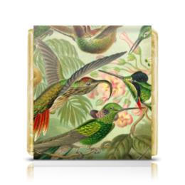 "Шоколадка 35х35 ""Колибри 2 (Trochilidae, Ernst Haeckel)"" - птицы, картина, колибри, день матери, эрнст геккель"