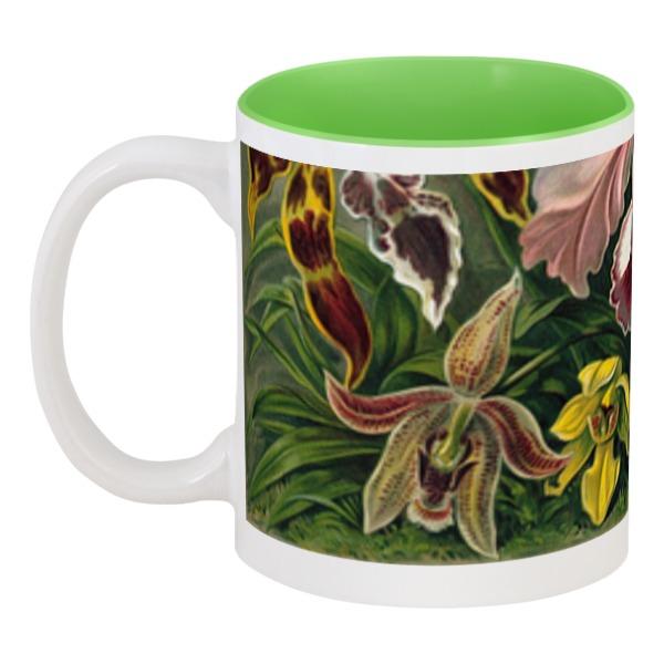 Кружка цветная внутри Printio Орхидеи (orchideae, ernst haeckel) кружка цветная внутри printio любимой маме орхидеи эрнста геккеля