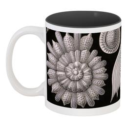 """Кружка цветная внутри """"Глобигерины (Globigerina, Ernst Haeckel)"""" - картина, черно-белый, ракушка, красота форм в природе, эрнст геккель"""