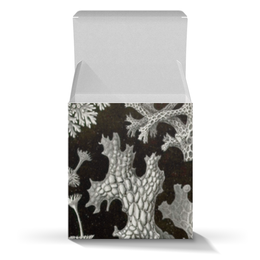 """Коробка для кружек """"Лишайники (Lichenes, Ernst Haeckel)"""" - новый год, картина, черно-белый, красота форм в природе, эрнст геккель"""