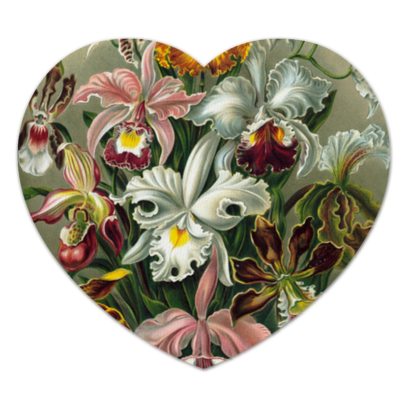 Коврик для мышки (сердце) Орхидеи (Orchideae, Ernst Haeckel)