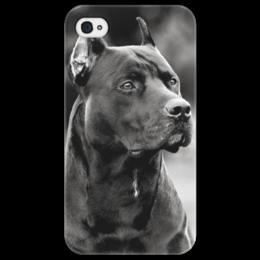 """Чехол для iPhone 4/4S """"Pit Bull"""" - арт, стиль, dog, собака, pit bull, питбультерьер, american pit bull"""