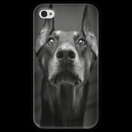 """Чехол для iPhone 4 глянцевый, с полной запечаткой """"Доберман """" - стиль, dog, оригинально, beautiful, doberman"""