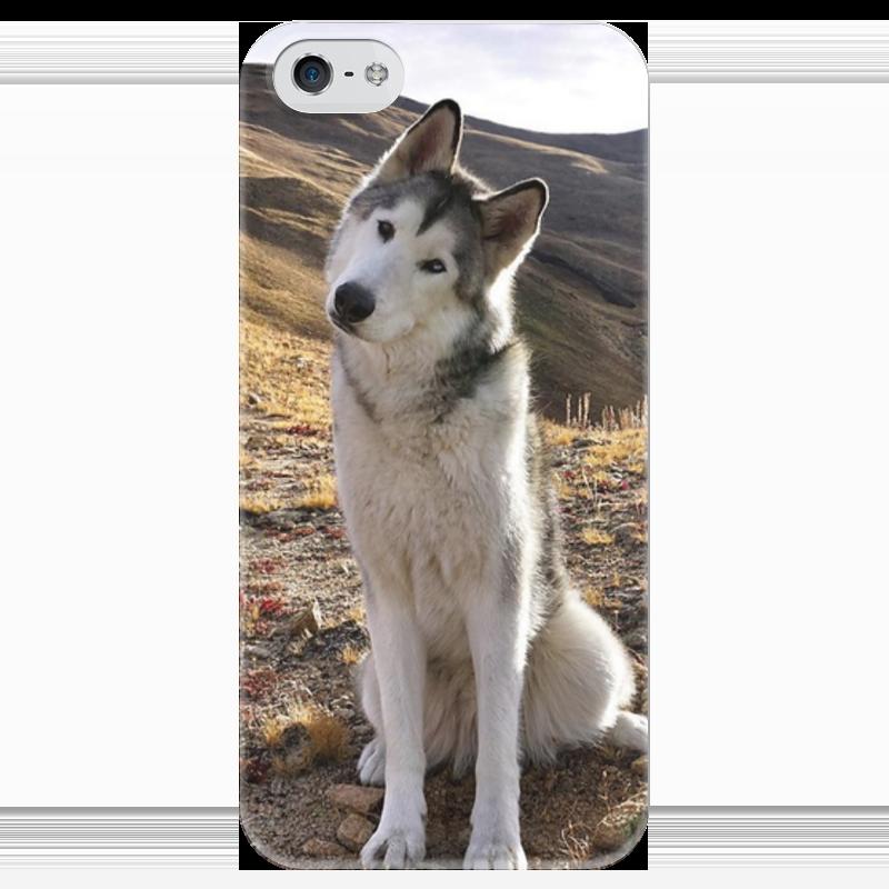 Чехол для iPhone 5 глянцевый, с полной запечаткой Printio Хаски чехол для iphone 5 глянцевый с полной запечаткой printio ember spirit dota 2