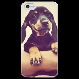 """Чехол для iPhone 5 глянцевый, с полной запечаткой """"Щенок"""" - щенок, собака, мило, такса"""