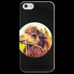 """Чехол для iPhone 5 глянцевый, с полной запечаткой """"Верблюд"""" - прикольные, этно, camel"""